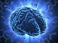 The human brain Stock Illustration
