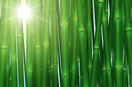 Stock Illustration of bamboo forest