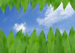 Frame from green leaf  isolated on blue sky  background Stock Photos