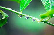 Stock Photo of green branches of water droplets