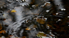 Rain drops in an autumn puddle Stock Footage