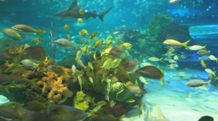 Colorful coral encrusted reefs with large numbers of tropical fish and sharks - stock footage