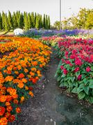 Colourful flowerbeds and winding grass pathway in an attractive thailand Stock Photos