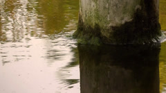 Tree in the Lake &  Reflection Stock Footage
