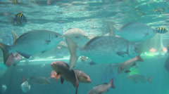 Snorkelers and Fish near the surface of the Pacific in the Great Barrier Reef Stock Footage