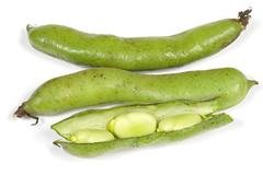 broad beans isolated - stock photo