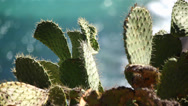 Stock Video Footage of Ocean Cactus 02 HD