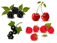 Big group of fresh berries and cherries. vector illustration Stock Illustration