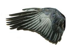 Bird wings Stock Photos