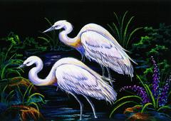White herons Stock Photos