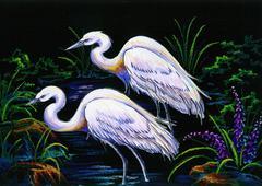 white herons - stock photo