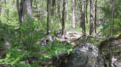 Mountain bike ride thru the woods Stock Footage
