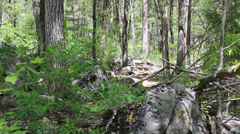 Walking mountain bikes thru the woods Stock Footage