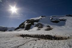 Stock Photo of penguin colony in antarctica