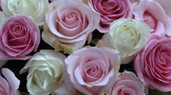 Pink and cream color UK roses arranged in a huge pot, zooming out view. Stock Footage