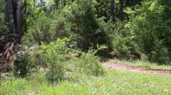 Mountain biking thru the woods Stock Footage