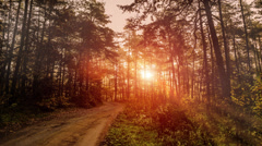 Timelapse video of Sun going through trees in forest during morning Stock Footage
