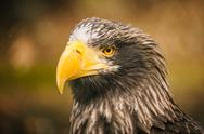 Stock Photo of proud eagle