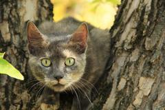 Stock Photo of Cat in the nature