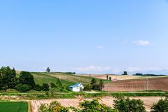 Hokkaido Field Stock Photos