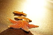 Stock Photo of seastars on the shore of a beach