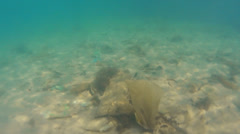 Marine pollution. Underwater - stock footage