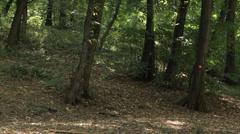 Male Mountain biker riding mountain bike downhill - tracking shot Stock Footage