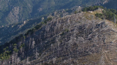 Aerial corsica forest dead fire Stock Footage