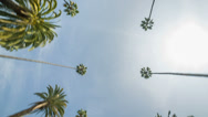 Stock Video Footage of Palm Trees Passing Overhead on Sunny Day - upward angle from moving car