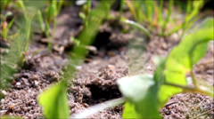 Ants crawling Stock Footage