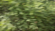 Stock Video Footage of Driving fast thorugh the woods - onboard camera - motion blur
