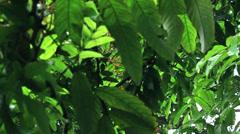 Tree Yuri Gagarin 1 Stock Footage