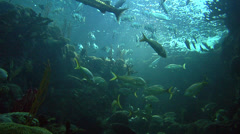 Various Reef Fish Swimming in Sunlight Stock Footage