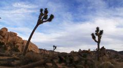 Joshua Tree National Park Landscape Time Lapse Stock Footage