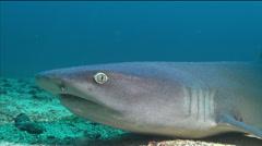 Whitetip reef shark breath - close up shot Stock Footage