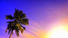 Palm tree at sunset. Tropical beach landscape with vivid sky, hot sun light. 4K Stock Footage