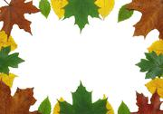 Stock Photo of AUTUMN LEAVES FRAME