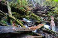 Stock Photo of rain forest stream covered fallen logs woods jungle outback travel