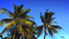 Palm trees on the beach with blue sky and wind. Tropical exotic background HD Stock Footage