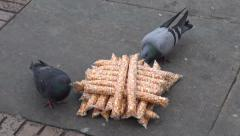 Pigeons Unable to Eat Bird Seeds, Animals Stock Footage