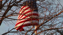 American Flag by Tree, Slow Motion Stock Footage