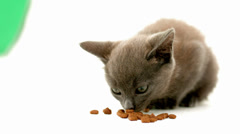 Kitten eating kibble Stock Footage