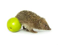 Hedgehog and apple Stock Photos