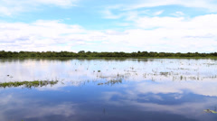 Wetlands in Pantanal, Brazil Stock Footage