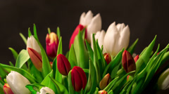 Bouquet of bright tulips blooms, timelapse Stock Footage