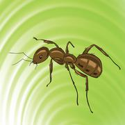 brown ant - stock illustration