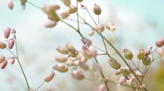 Spring flowers on wind Stock Footage