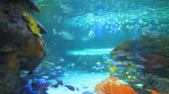 Colorful tropical coral encrusted reefs with swimming tropical fish - stock footage
