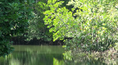 Long zoom out from a mangrove river - 6 Stock Footage