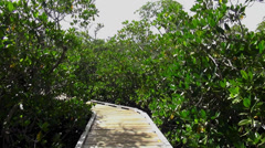 Walking trail through Mangrove forest Key Largo - stock footage